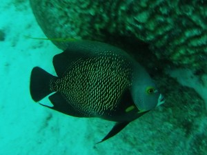 Fish Bonaire