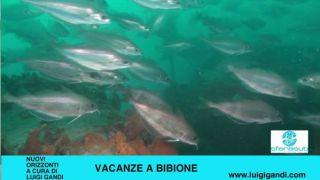 Vacanze a Bibione 2019 – puntata 4 – Tegnue