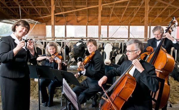 Sonatas de Mozart para vacas leiteiras, em fazenda da Austria