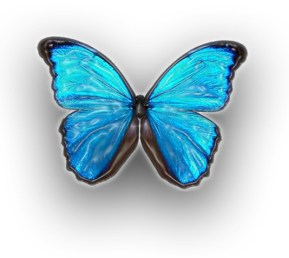 Blue-Butterfly-1-MVH4IDWDFP-1280x1024