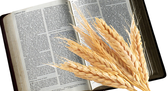 does-the-bible-say-we-should-eat-grains