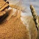 Quem é joio e quem é trigo?