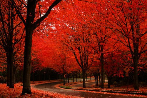 Autumn Road, Olympia, Washington