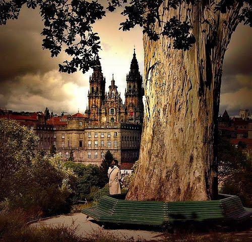 Ancient Tree, Galacia, Spain