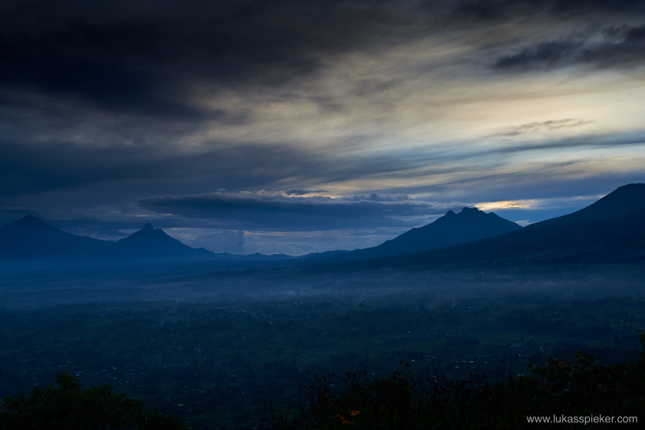 The Virunga volcanic mountains of Central Africa are home to mountain gorilla living in the jungle forest on the often misty and cold slopes of the dormant volcanoes in an altitude between 2200 to 4300 meters.