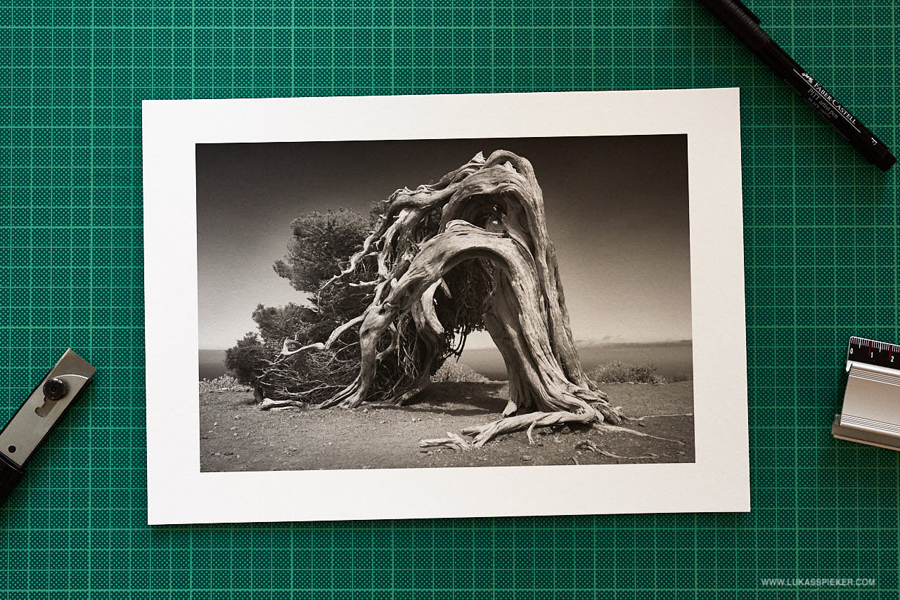 Black and white print on Hahnemuehle Matt FineArt Photo Rag 308 gsm paper: El Sabinar, a phoenicean tree shaped by centuries of trade winds, El Hierro.