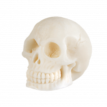 A large white skull shaped block of Soap, on a white background.
