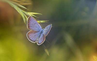 butterfly, insect, animal-6361572.jpg