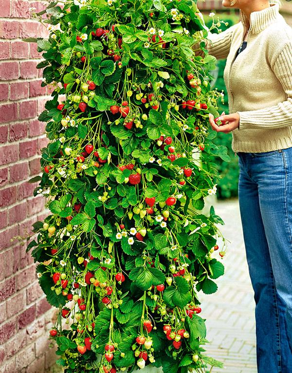 Plantarea florilor de balcon start la ghivece si jardiniere - Plante de balcon ...