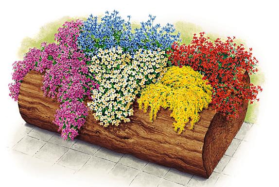 Plantarea florilor de balcon - Start la ghivece si jardiniere