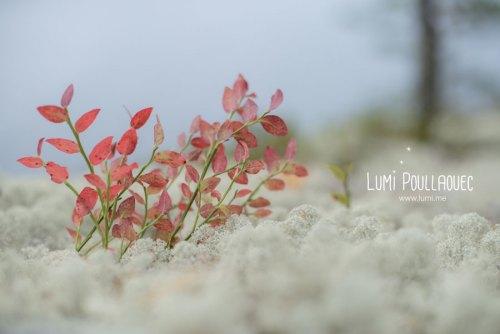finlande-lumi-poullaouec-photographies-28