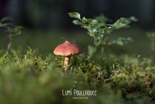 finlande-lumi-poullaouec-photographies-34