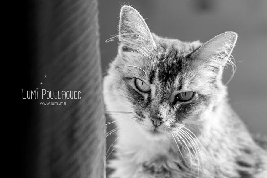 Photographies d un chat tout mignon lumi - Chat tout mignon ...