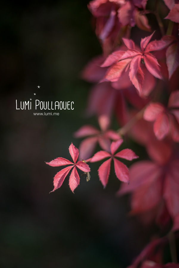 12-LumiPoullaouec-2