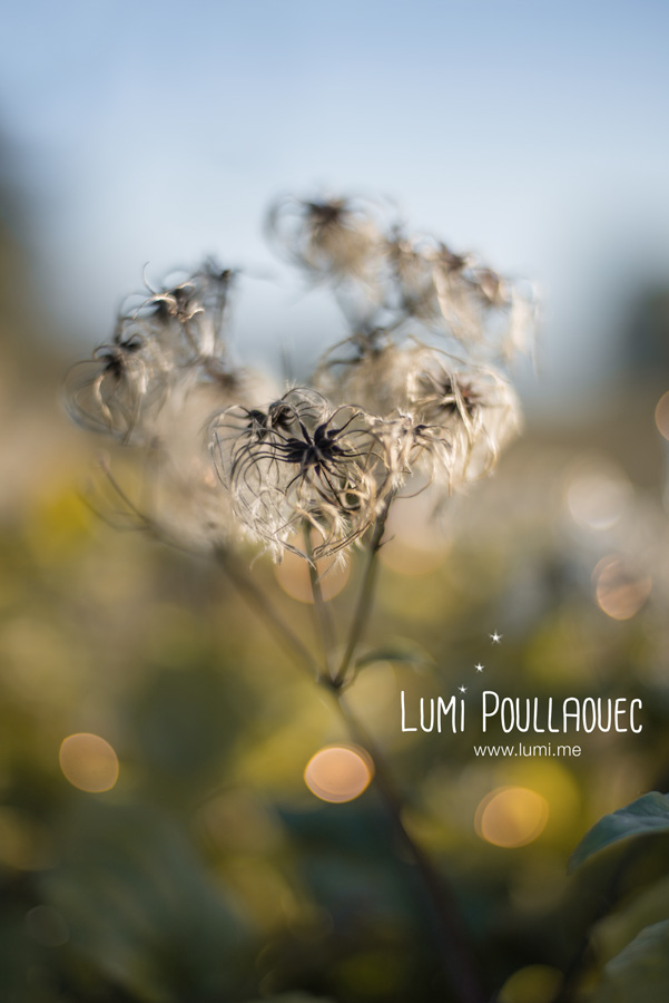18-LumiPoullaouec-10