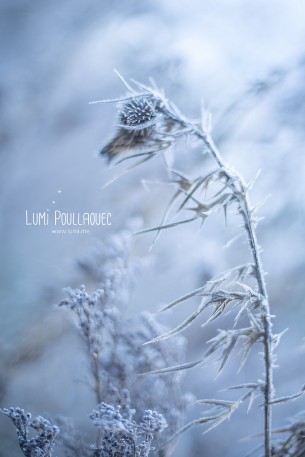 @LumiPoullaouec-Gel-4