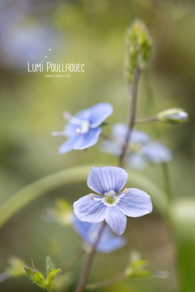 macro-Lumi-Poullaouec-15