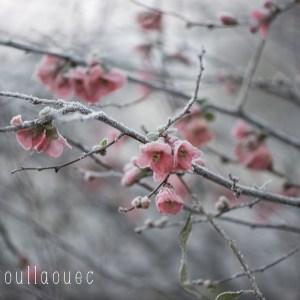 Lumi Poullaouec - photographie