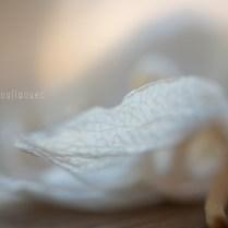 D'un souffle d'automne... Indistinct