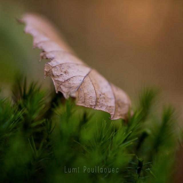LumiPoullaouec-automne-3