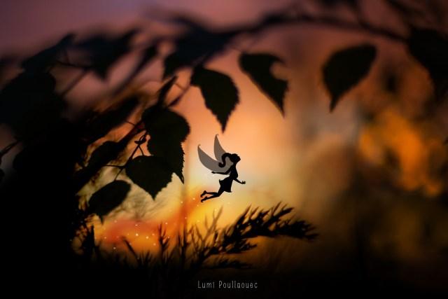 Fée féérie photographie dessin mélange ombre crépuscule foret