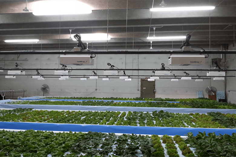 Daily Harvest Aquaponics