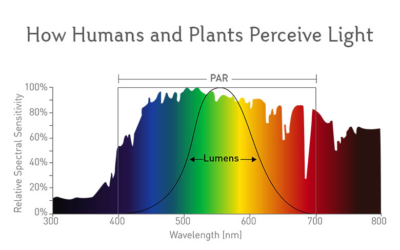 How Humans and Plants Perceive Light