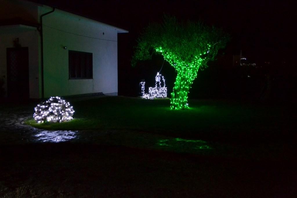 (Foto 15- 53a) Ulivo verde 5m + pozzo