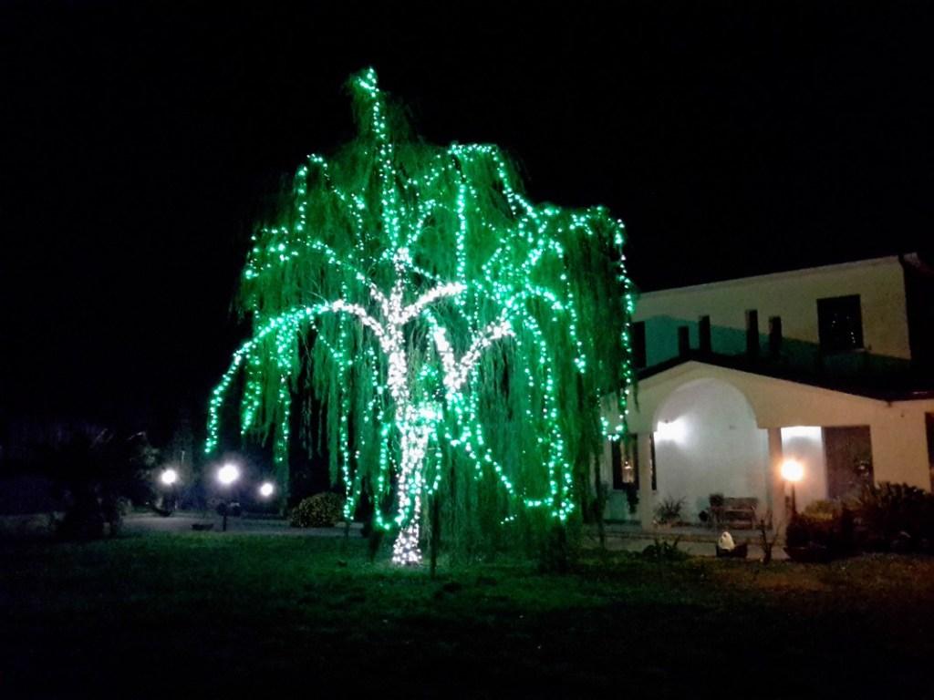 (Foto 15- 54) albero verde 7m