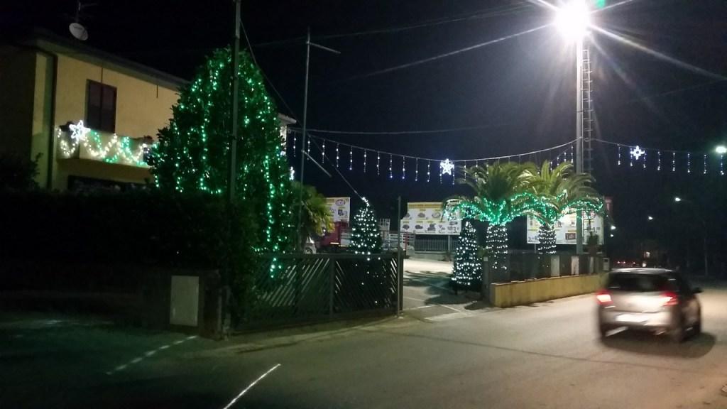 (Foto 15- 56) alberi verdi