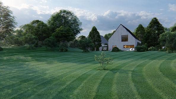 grass on the hillside594x335