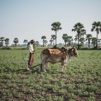 Myanmar-2155-2