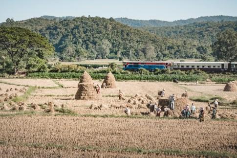 Myanmar-3610
