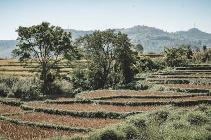 Myanmar-3798