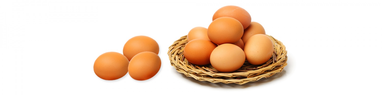 -ביצים-6