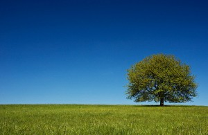 Photo of an open green field, blue sky, single tree.
