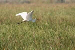 WWF:n uudessa livekamerassa seurataan lintukosteikon syksyä