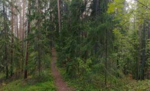 Suomalaisten jäljissä metsään – yli 300 suomalaista kirjoitti suhteestaan metsään