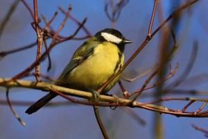 Luonto-Liiton kevätseuranta innostaa lähiluontoon