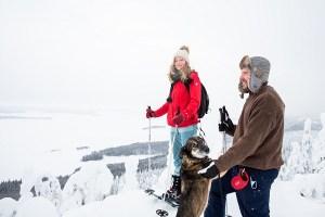 30-vuotias Kolin kansallispuisto on suositumpi kuin koskaan