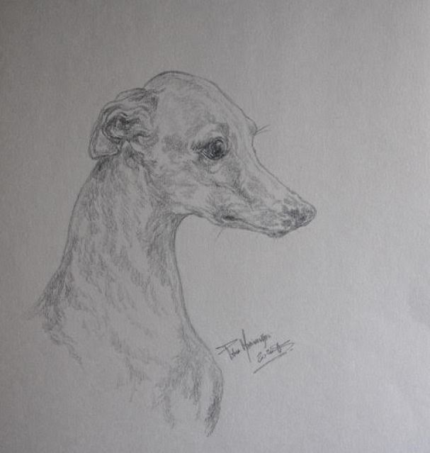 Italian Greyhound breeders