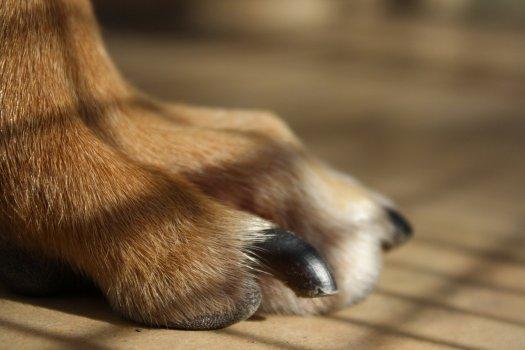 Tenere corte le unghie del cane