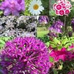 Blüten im Garten