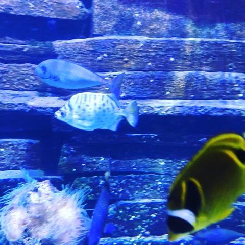 Geomar Aquarium