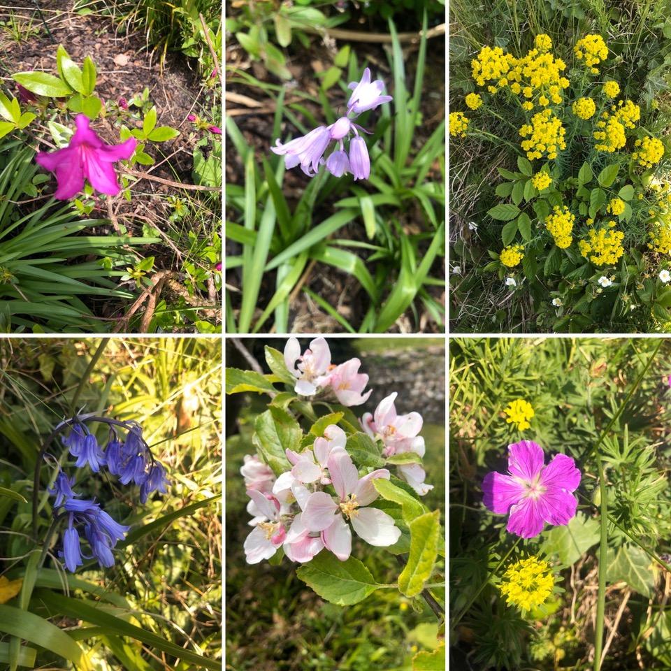 Blüten in meinem Garten - Woche 9 der Zwangspause - Freitagszeuch