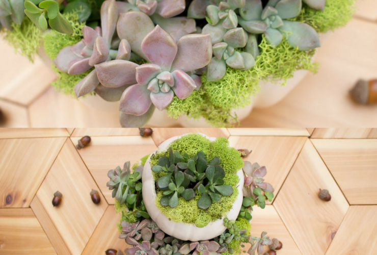 DIY Tiered Pumpkin Succulent Planter