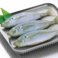 冷凍保存したお魚をすばやく、おいしく解凍できる「クイックプレート」がエエ感じ!