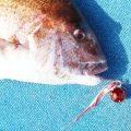 【2倍の誘い効果!?】コダワリが詰まり過ぎてヤバい「桜幻・鯛ラバ用カスタムスイベル」に大注目