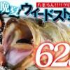 ロクマル捕獲に成功! たまらんばい永野の実釣ロケ動画を配信中