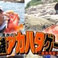 【実釣動画公開】トモ清水の沖磯アカハタゲーム!【ピュアフィッシング】
